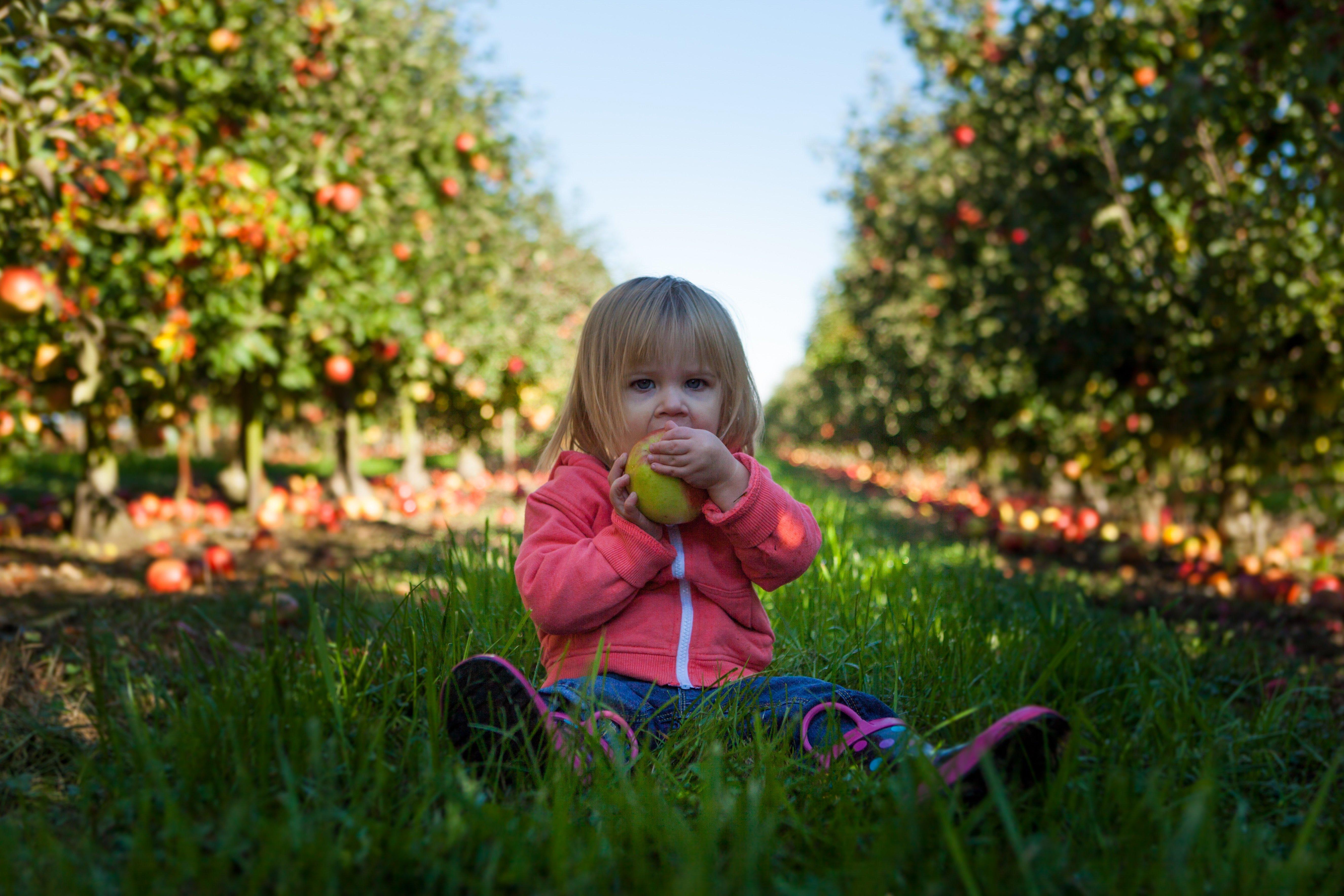 Io Mangio da solo: sviluppo e comportamento alimentare nei bambini